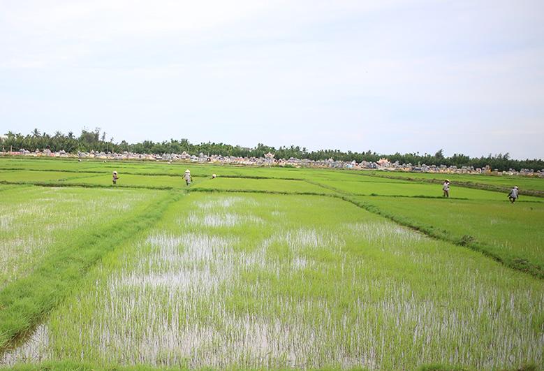 vietnam-comptoir-des-voyages1