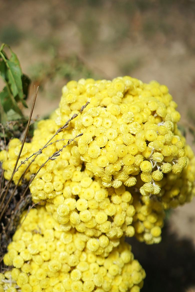 loccitane-fleurs